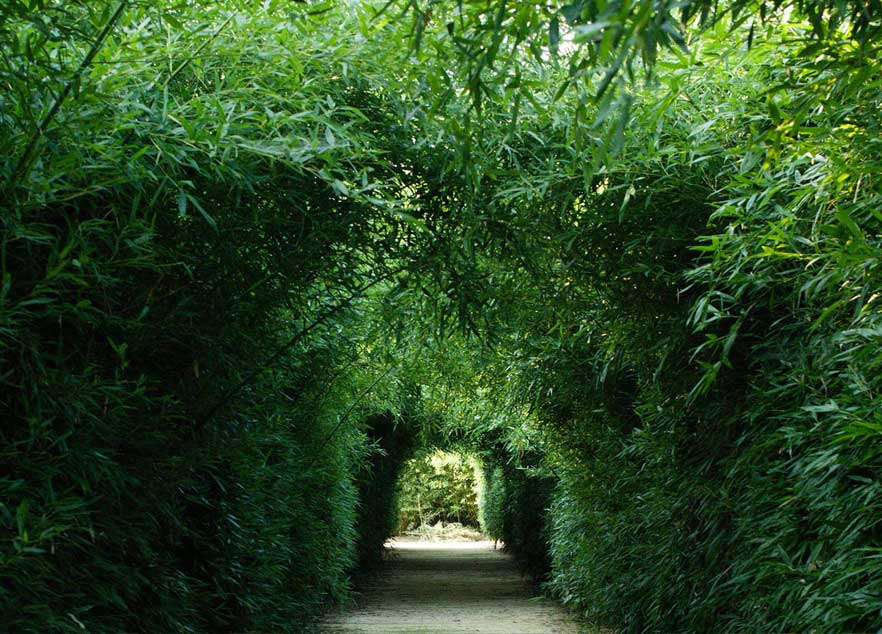 Corridoio labirinto di bambù